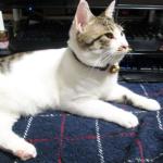 (ΦωΦ) 明日(4月11日)発売の猫の本 (ΦωΦ)