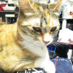 (ΦωΦ) 【明日(4月13日)発売の猫の本】 (ΦωΦ)