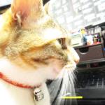 (ΦωΦ) 明日(5月24日)発売の猫の本ニャ~