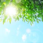 【BGM】「初夏の早朝のようなすがすがしい気持ちになれるBGM」暑さをしばしの間忘れされてくれるかのよう(*´∀`*)