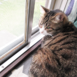 (ΦωΦ) 明日(6月8日)発売の猫の本ニャ~「猫的感覚──動物行動学が教えるネコの心理」