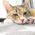 (ΦωΦ) 明日(6月28日水曜日)の猫の本ニャ~