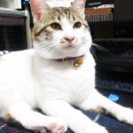 (ΦωΦ) 明日(6月29日木曜日)の猫の本ニャ~ Kindle