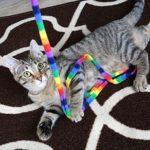 【猫さま用】「キャットダンサー レインボー キャットチャーマー」似たようなものは持っていますが、レインボーではない、評価が気になる