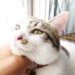 (ΦωΦ) 明日(7月11日火曜日)の猫の本ニャ~