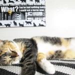 (ΦωΦ) 明日(7月28日:金)の猫の本ニャ~