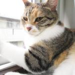 (ΦωΦ) 明後日(8月7日:月曜日)発売の猫の本ニャ~