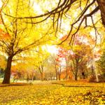 【BGM】「Autumn In New York – Sweet Jazz Trio」秋晴れの爽やかで静かな午後に聴きたい