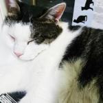 (ΦωΦ) 明日(9月12日:火曜日)発売の猫の本・書籍・カレンダー (ΦωΦ)