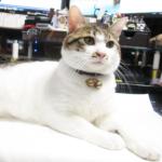 (ΦωΦ) 明後日(9月19日:火曜日)発売の猫の本・書籍・カレンダー (ΦωΦ)