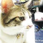 (ΦωΦ) 明日(9月21日:木曜日)発売の猫の本・書籍・カレンダー (ΦωΦ)