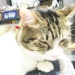 (ΦωΦ) 明日(9月22日:金曜日)発売の猫の本・書籍・カレンダー (ΦωΦ)