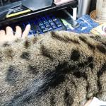 (ΦωΦ) 明後日(9月25日:月曜日)発売の猫の本・書籍・カレンダー (ΦωΦ)