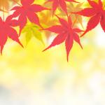 【BGM】「和風 Japanese style BGM 17曲 秋山裕和」凄いですわ。秋山さん。鳥肌立ちましたわ。