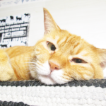 (ΦωΦ) 明日(9月30日)発売の猫の本・書籍・カレンダー (ΦωΦ)