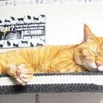 (ΦωΦ) 明日(9月29日)発売の猫の本・書籍・カレンダー (ΦωΦ)
