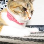 (ΦωΦ) 明日(10月5日)発売の猫の本・書籍・カレンダー (ΦωΦ)  【書籍】