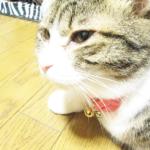 (ΦωΦ) 明日(10月6日)発売の猫の本・書籍・カレンダー (ΦωΦ)