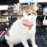 (ΦωΦ) 明日(10月13日)発売の猫の本・書籍・カレンダー (ΦωΦ)