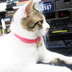 (ΦωΦ) 明日(10月9日)発売の猫の本・書籍・カレンダー (ΦωΦ)
