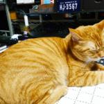 (ΦωΦ) 明日(10月12日)発売の猫の本・書籍・カレンダー (ΦωΦ)