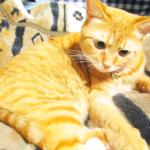 (ΦωΦ)明日(10月18日)発売の猫の本・書籍・カレンダー (ΦωΦ)