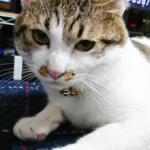 (ΦωΦ)明日(10月26日)発売の猫の本・書籍・カレンダー (ΦωΦ)