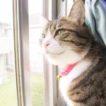 (ΦωΦ)明日(10月28日)発売の猫の本・書籍・カレンダー (ΦωΦ)