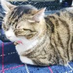 (ΦωΦ)明日(11月4日)発売の猫の本・書籍・カレンダー (ΦωΦ)