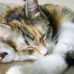 (ΦωΦ)明日(11月21日)発売の猫の本・書籍・カレンダー (ΦωΦ)