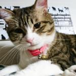 (ΦωΦ)明日(11月28日)発売の猫の本・書籍・カレンダー (ΦωΦ)