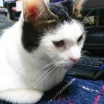 (ΦωΦ)本日(12月4日)発売の猫の本・書籍・カレンダー (ΦωΦ)