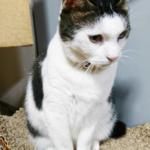 (ΦωΦ)明日(12月7日)発売の猫の本・書籍・カレンダー (ΦωΦ)