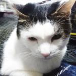(ΦωΦ)明日(12月8日)発売の猫の本・書籍・カレンダー (ΦωΦ)