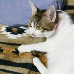 (ΦωΦ)明日(12月11日)発売の猫の本・書籍・カレンダー (ΦωΦ)