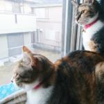 (ΦωΦ)明日(12月12日)発売の猫の本・書籍・カレンダー (ΦωΦ)