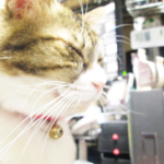 (ΦωΦ)本日(12月20日)発売の猫の本・書籍・カレンダー (ΦωΦ)