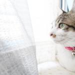 (ΦωΦ)明日(12月21日)発売の猫の本・書籍・カレンダー (ΦωΦ)