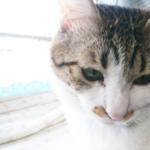 (ΦωΦ)明日(12月22日)発売の猫の本・書籍・カレンダー (ΦωΦ)