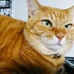 (ΦωΦ)明日(12月25日)発売の猫の本・書籍・カレンダー (ΦωΦ)