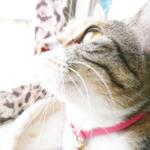 (ΦωΦ)明日(1月11日)発売の猫の本・書籍・カレンダー (ΦωΦ)