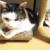 (ΦωΦ) 明日(6月23日:金曜日)発売の猫の本ニャ~