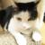 (ΦωΦ) 明日(7月20日木曜日)の猫の本ニャ~