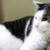 (ΦωΦ) 明日(9月16日:土曜日)発売の猫の本・書籍・カレンダー (ΦωΦ)