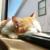 [2018年]岩合光昭 猫 カレンダー