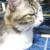 (ΦωΦ)明日(1月17日)発売の猫の本・書籍・その他 (ΦωΦ)