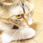 (ΦωΦ)本日(3月24日)発売の猫の本・書籍・その他 (ΦωΦ)