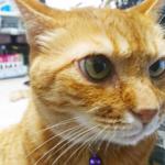 (ΦωΦ)明後日(7月2日)発売の猫の本・書籍・その他 (ΦωΦ)