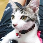 (ΦωΦ)本日(7月18日)発売の猫の本・書籍・その他 (ΦωΦ)
